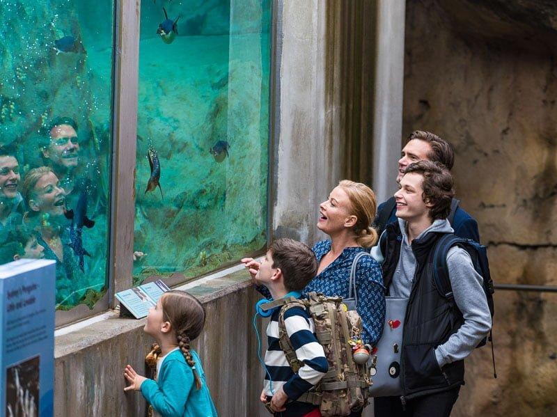 Family at penguin exhibit for film at Taronga Zoo